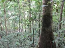 Walk to Waterfall Toroyacu