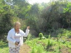 Angelica's farm