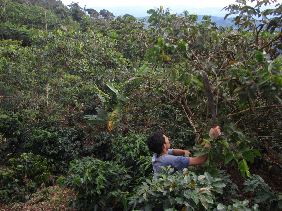 rural tourism | Organic coffee | hiking |