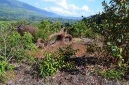 Sculpture Trail and Mirrador