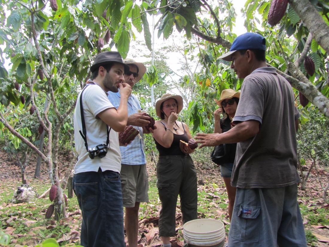 chocolate making adventures   cacao farms in Peru   cacao in Peru