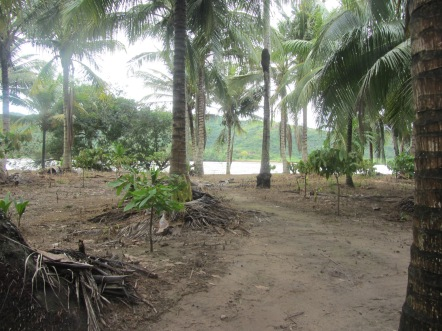 cacao island
