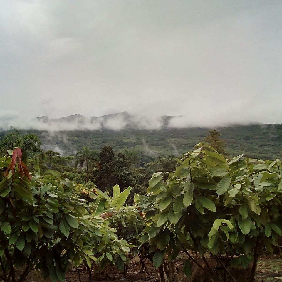 agritourism | organic cacao farms Peru