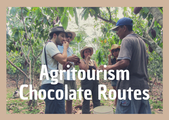 cacao farms | family vacations | peru