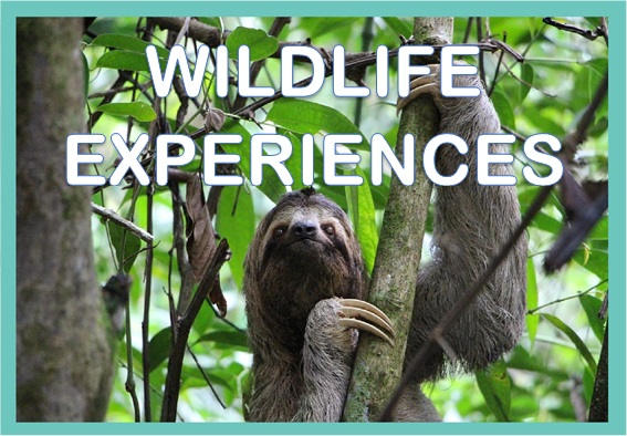 wildlife experiences